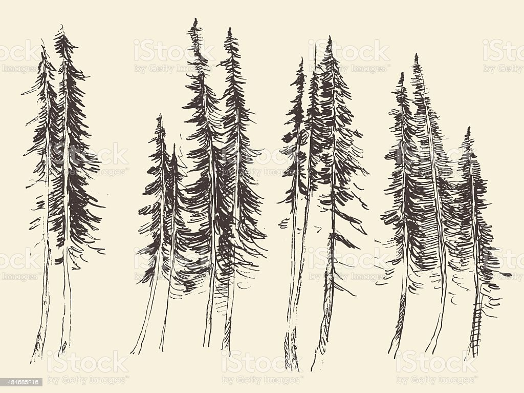 Fir forest engraving vector hand drawn sketch vector art illustration