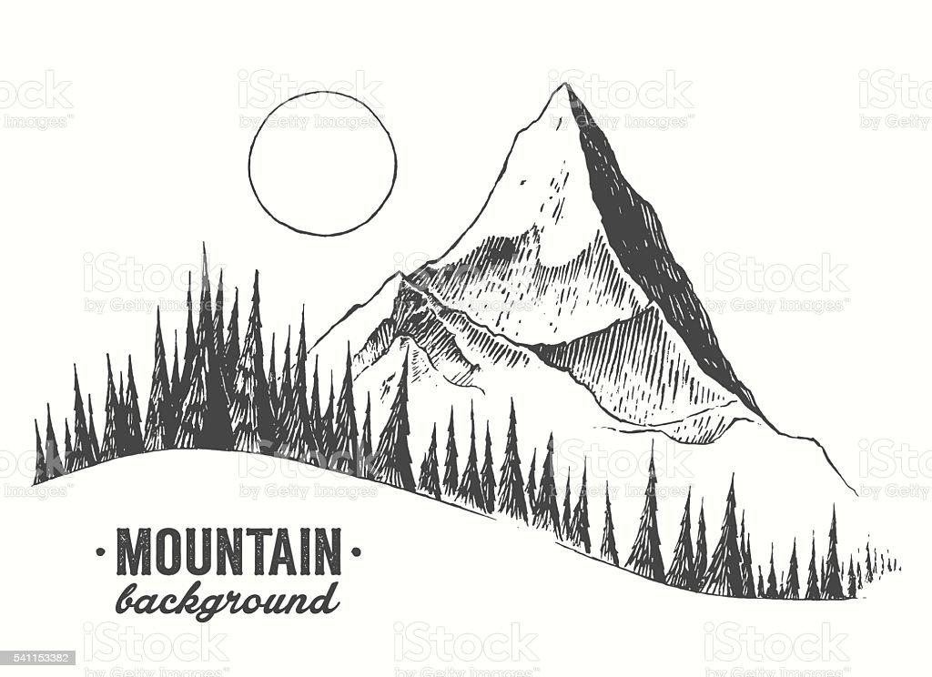 Fir forest mountain drawn vector illustration vector art illustration