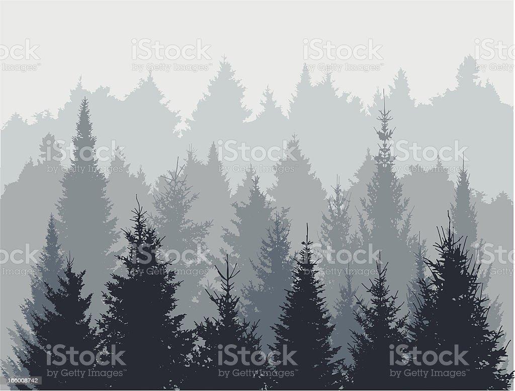 Fir tree forest vector art illustration
