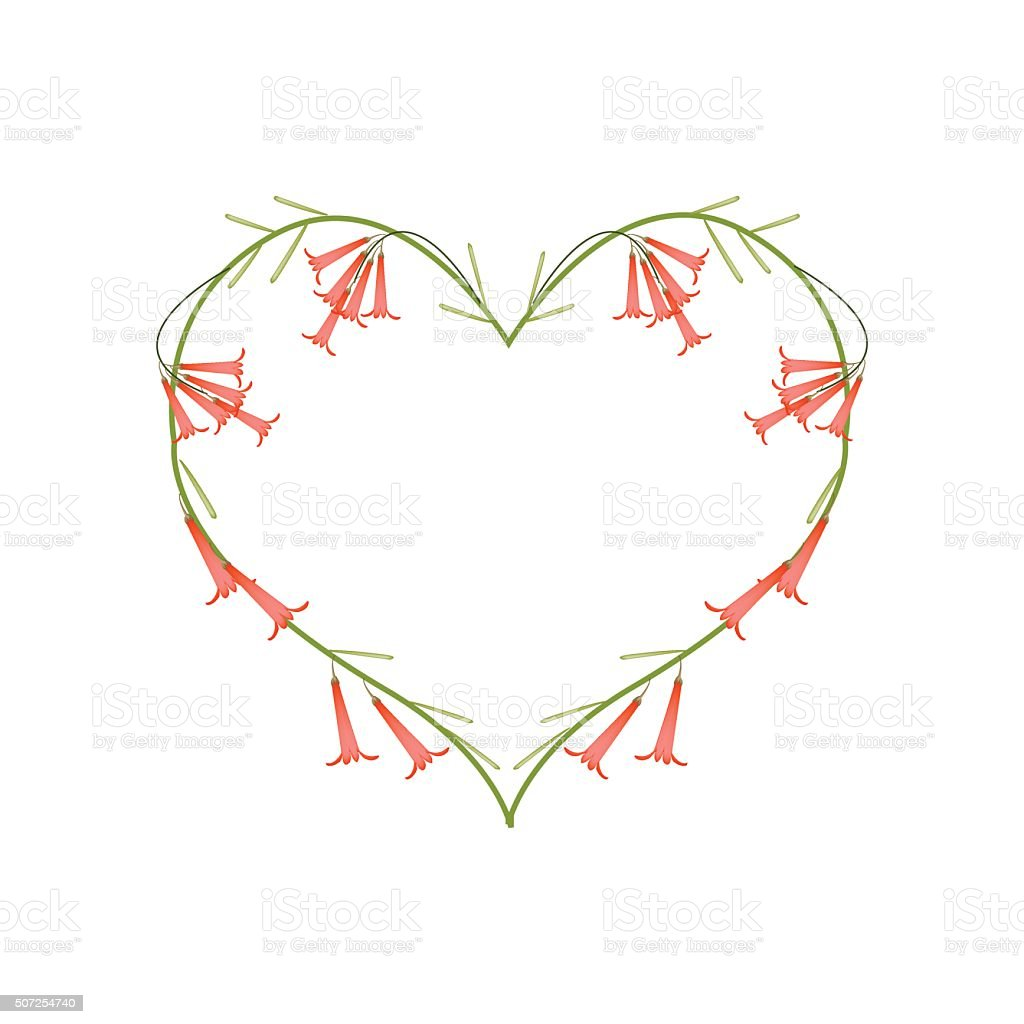 Firecracker Flowers or Russelia Flowers in Heart Shape vector art illustration