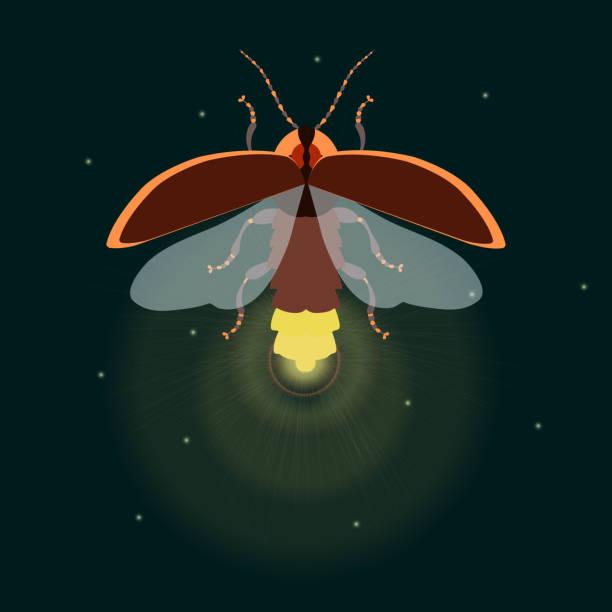 Fireflies Clip Art, Vector Images & Illustrations - iStock