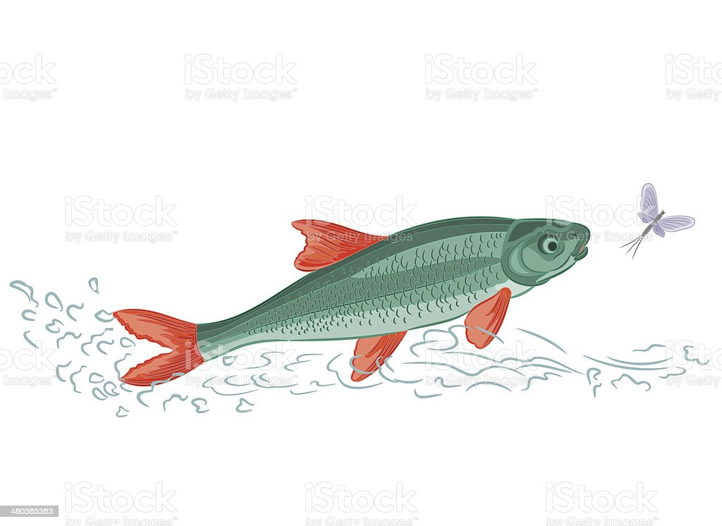 Fish and ephemera vector art illustration