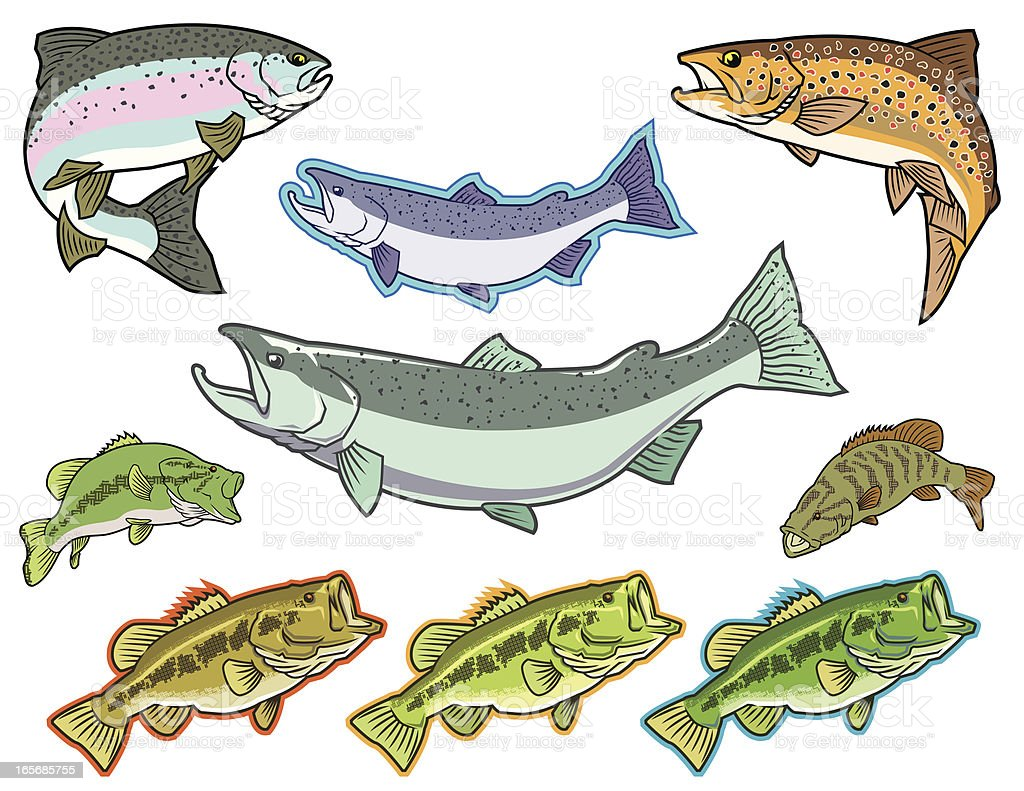 Fish: Bass, Salmon, Trout vector art illustration