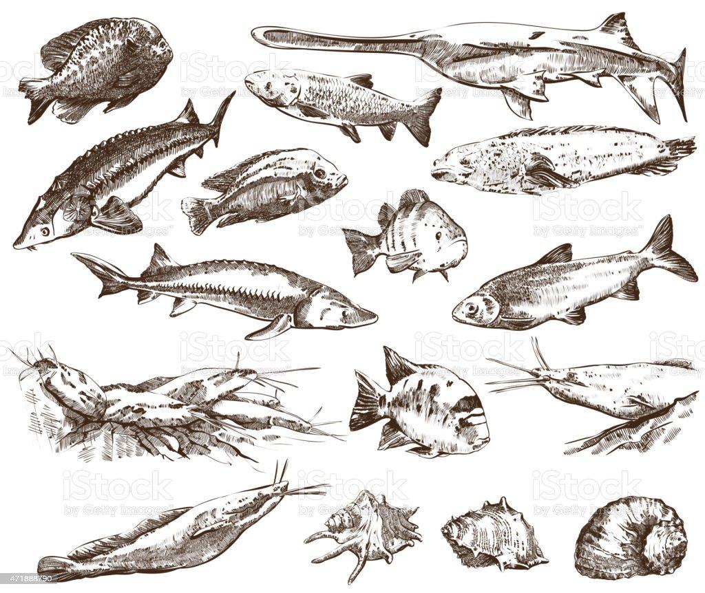Fish collection vector art illustration