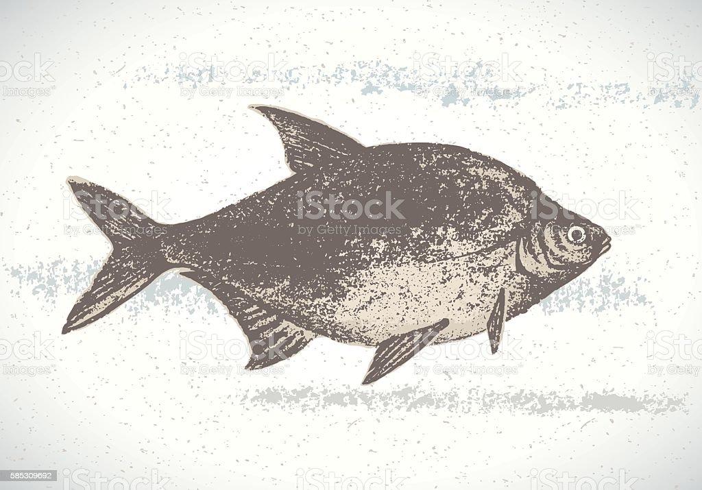 Fish illustration. vector art illustration
