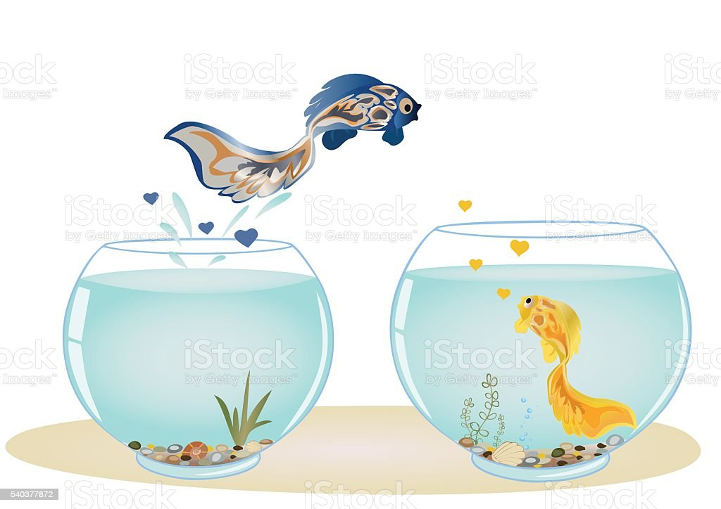 Fish in love jumping to his beloved vector art illustration