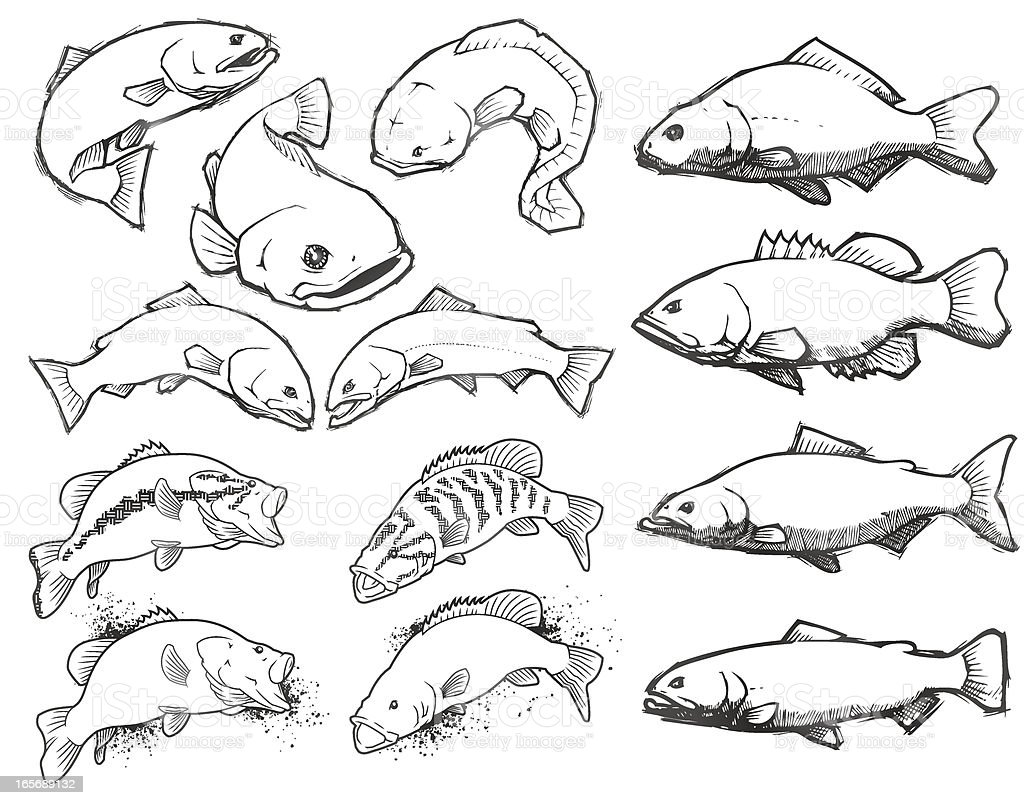 Fish: Pencil Sketch Set royalty-free stock vector art