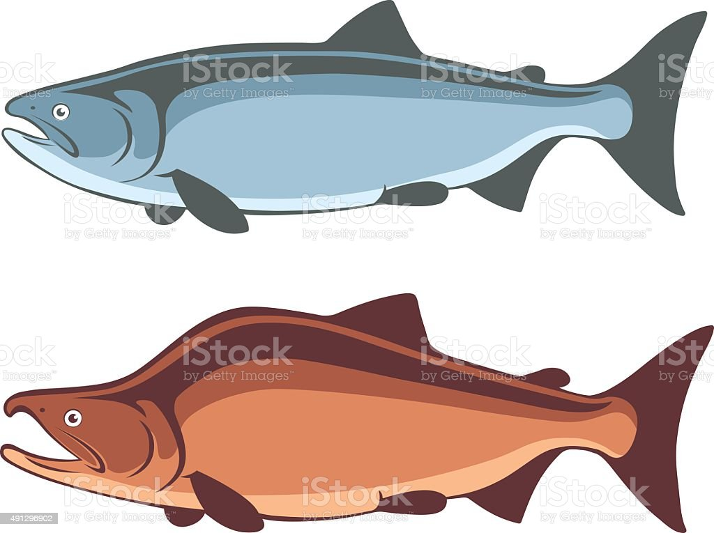 fish salmon vector art illustration
