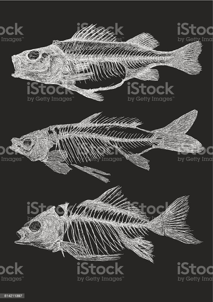 Fish Skeletons vector art illustration