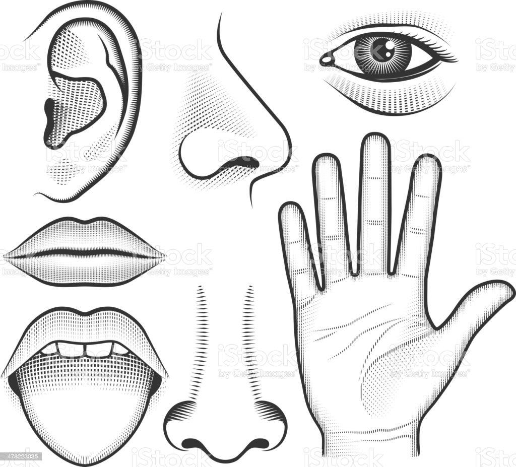 Five Human Senses black & white vector interface icon set vector art illustration