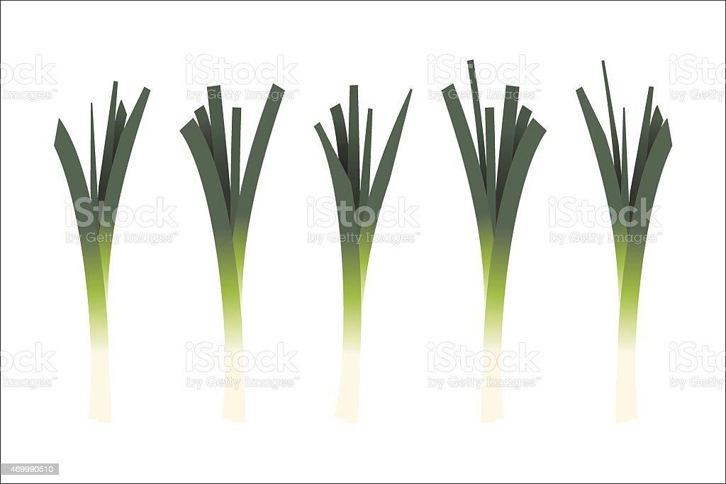 Five leeks on white background vector art illustration