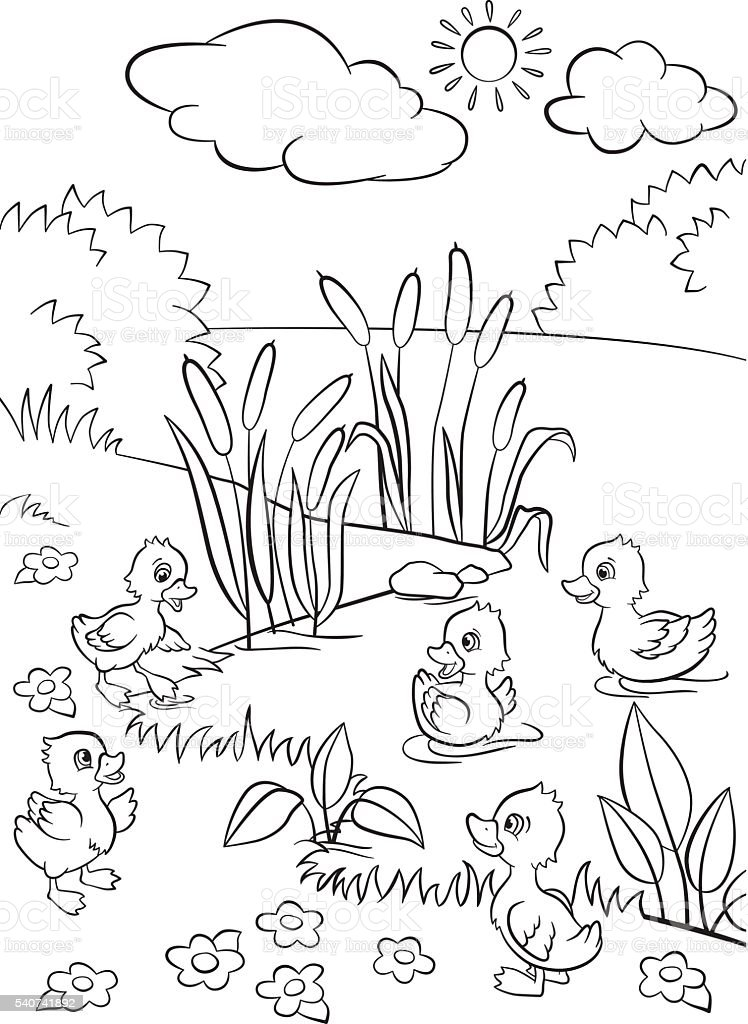 Five little cute ducklings vector art illustration