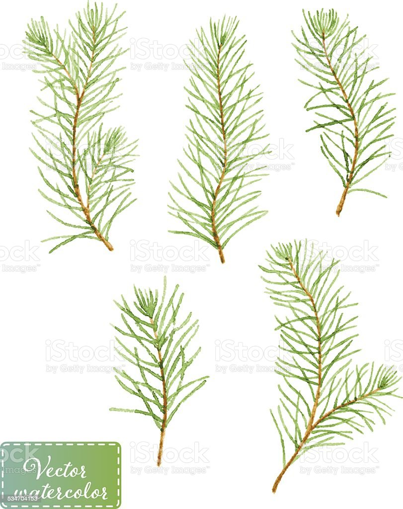 Five pine branches. Vectorized watercolor drawing. vector art illustration