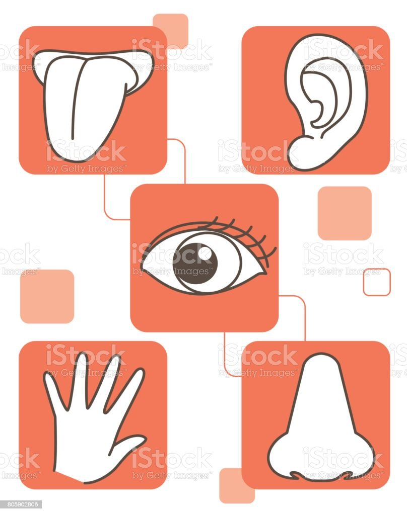Five senses set vector art illustration