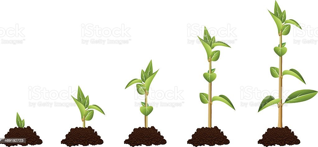 Five stage diagram showing plant growth Sequence vector art illustration