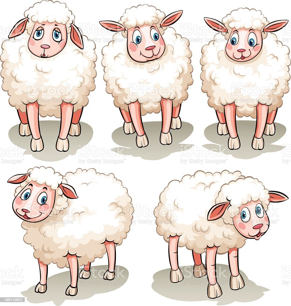Five white sheeps vector art illustration