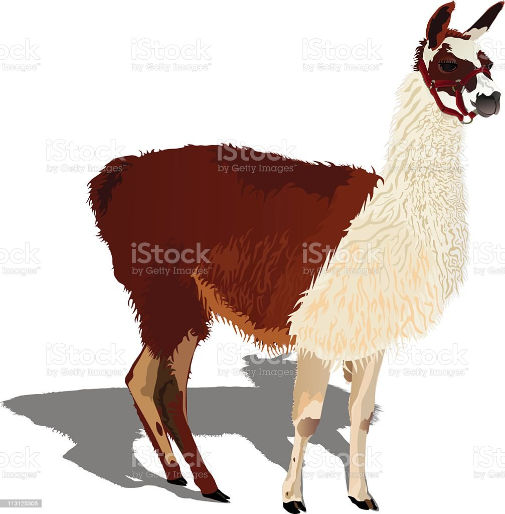 Llama (Vector) royalty-free stock vector art