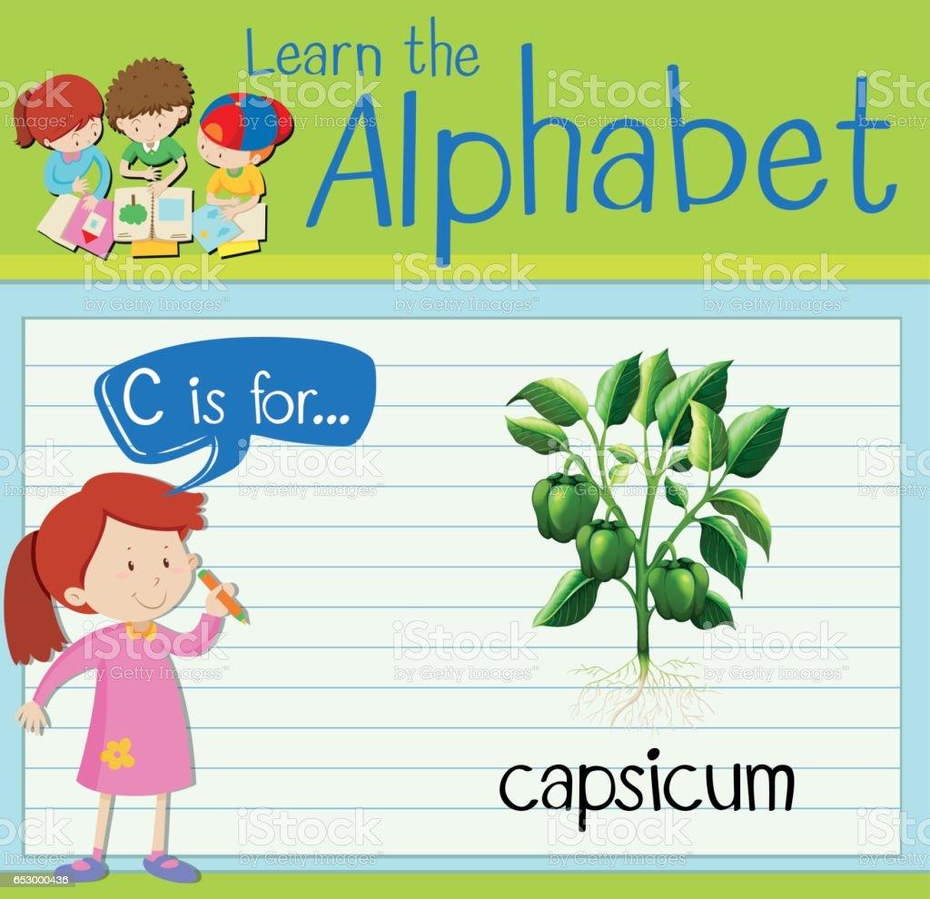 Flashcard letter C is for capsicum vector art illustration
