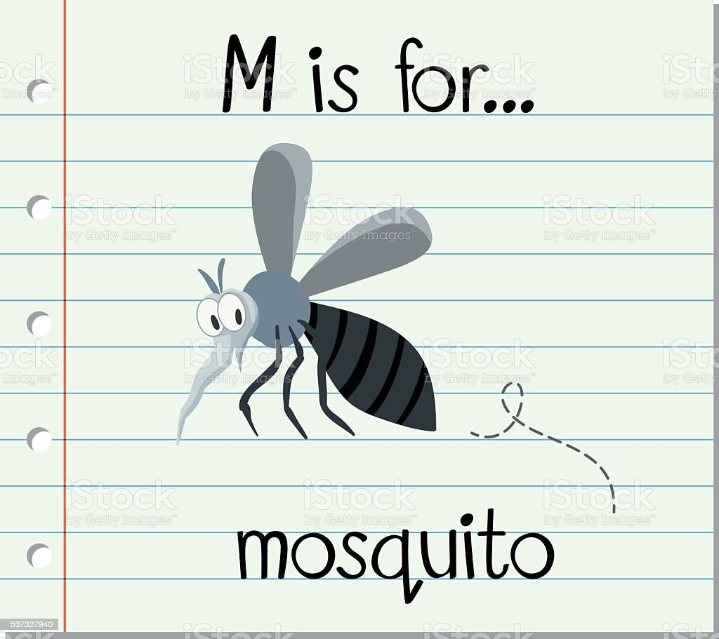 Flashcard letter M is for mosquito vector art illustration