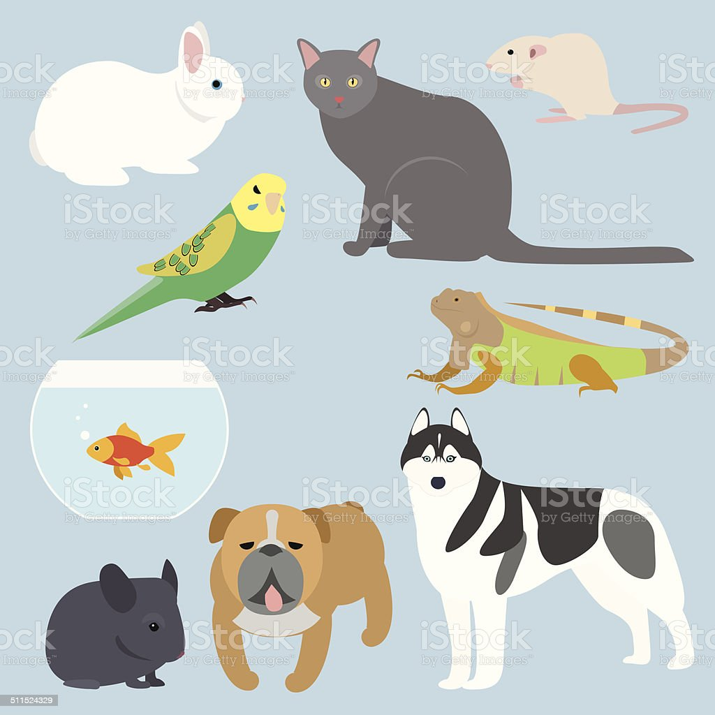 Flat design all kind of pets vector art illustration