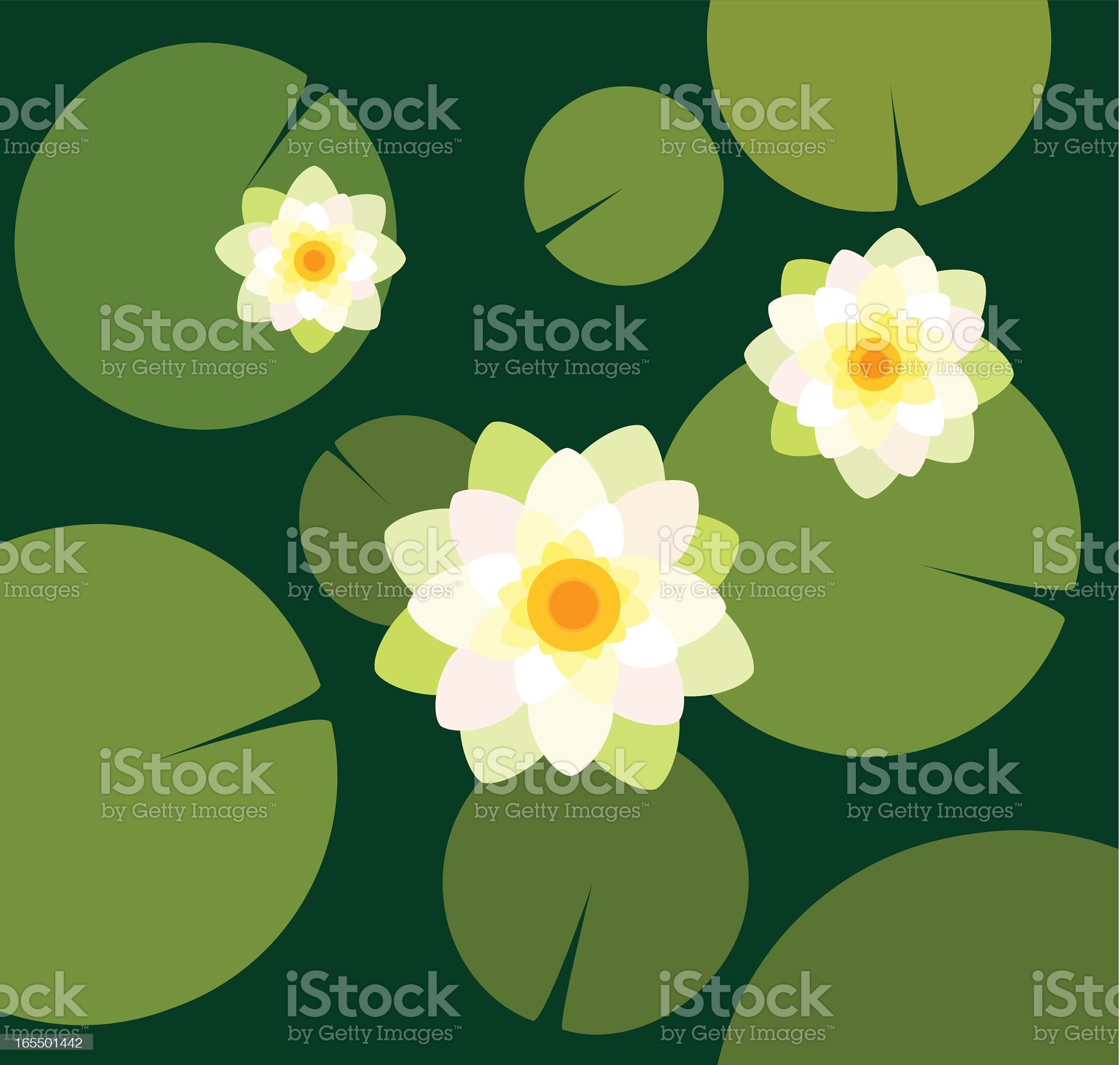 Flat drawing of water lilies viewed from above royalty-free stock vector art