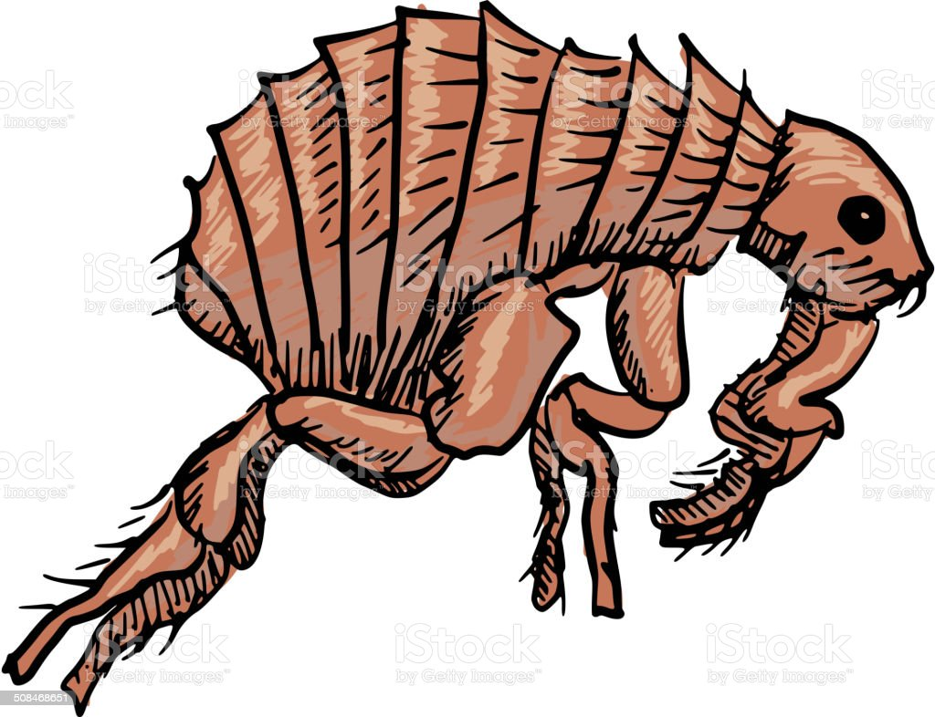 Why No One Talks About Fleas Anymore