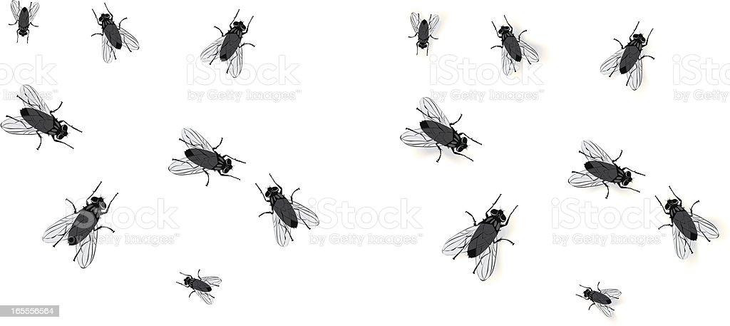 Flies vector art illustration