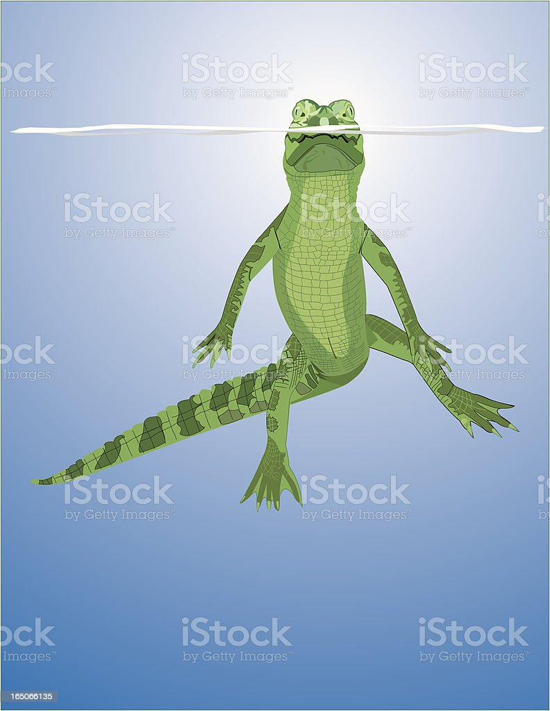 Floating Gator royalty-free stock vector art