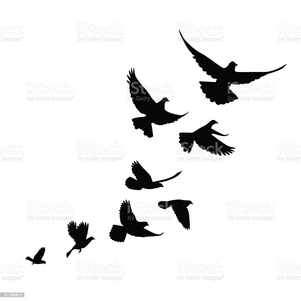 flock of birds (pigeons) go up. vector art illustration