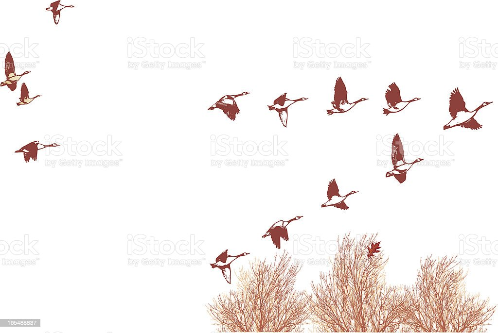 Flock of Geese Over the Tree Tops vector art illustration