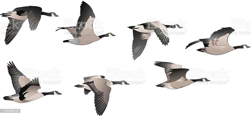 Flock of Geese vector art illustration