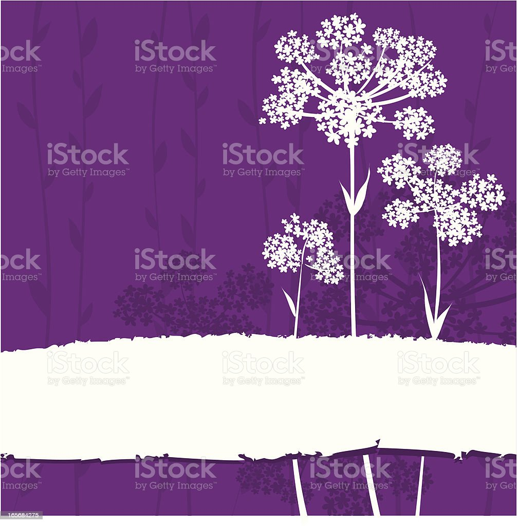 Floral background - Anise flowers royalty-free stock vector art