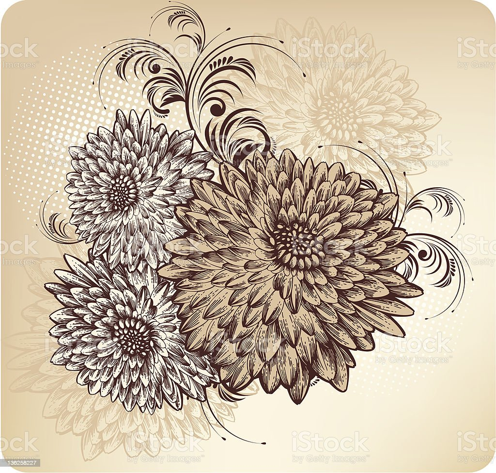 Floral background with blooming chrysanthemums, hand drawing. royalty-free stock vector art