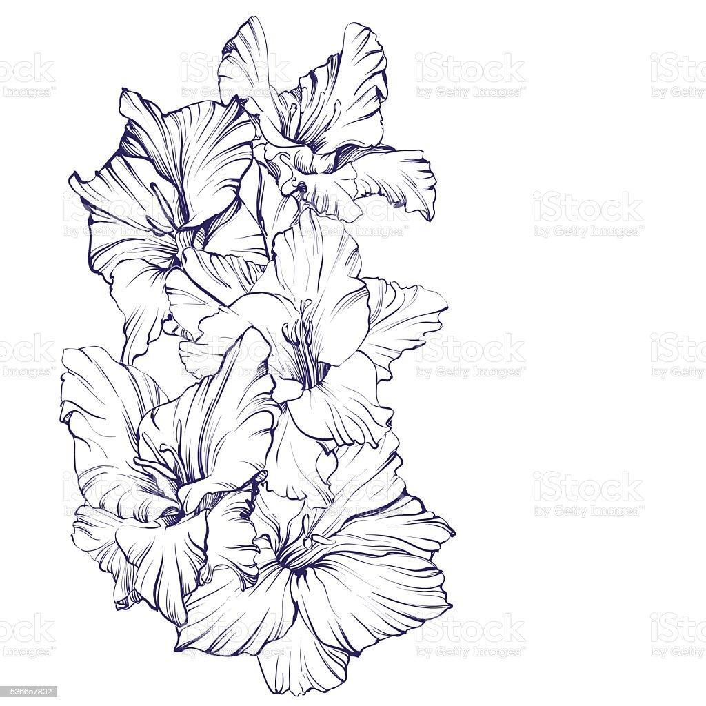 floral blooming gladiolus hand drawn vector illustration sketch vector art illustration