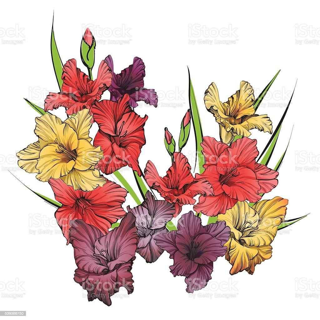 Gladiolus Clipart Cliparts
