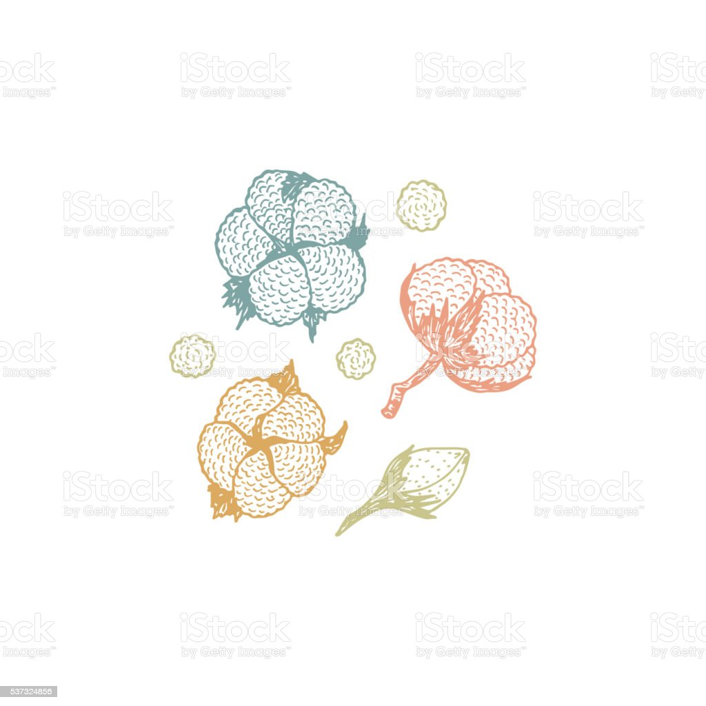 Floral collection. Cotton vector Set. Hand drawn doodle cotton buds vector art illustration