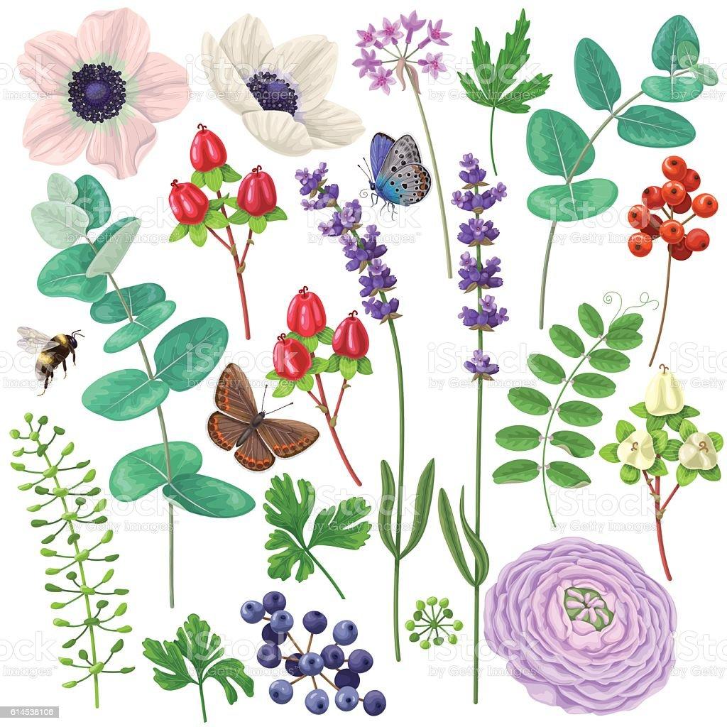 Floral elements set vector art illustration