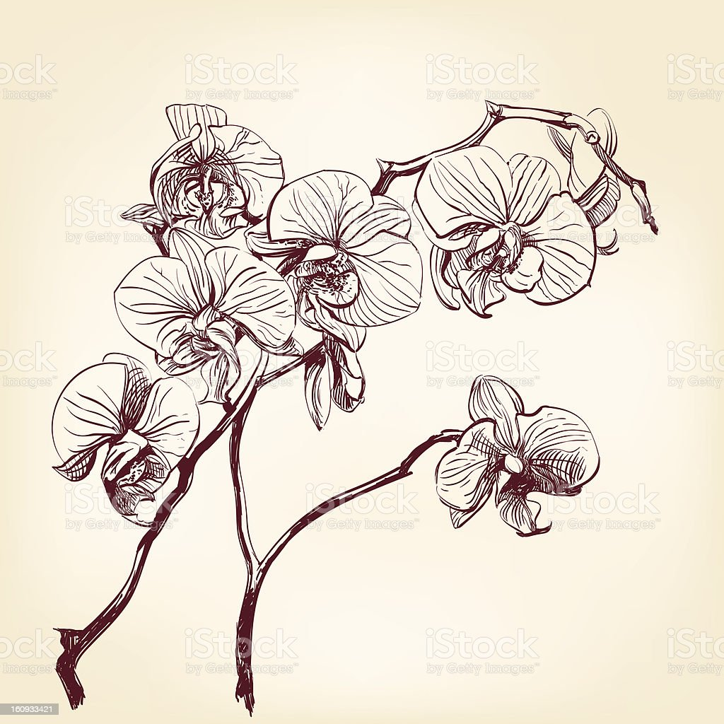 floral orchid hand drawn vector vector art illustration