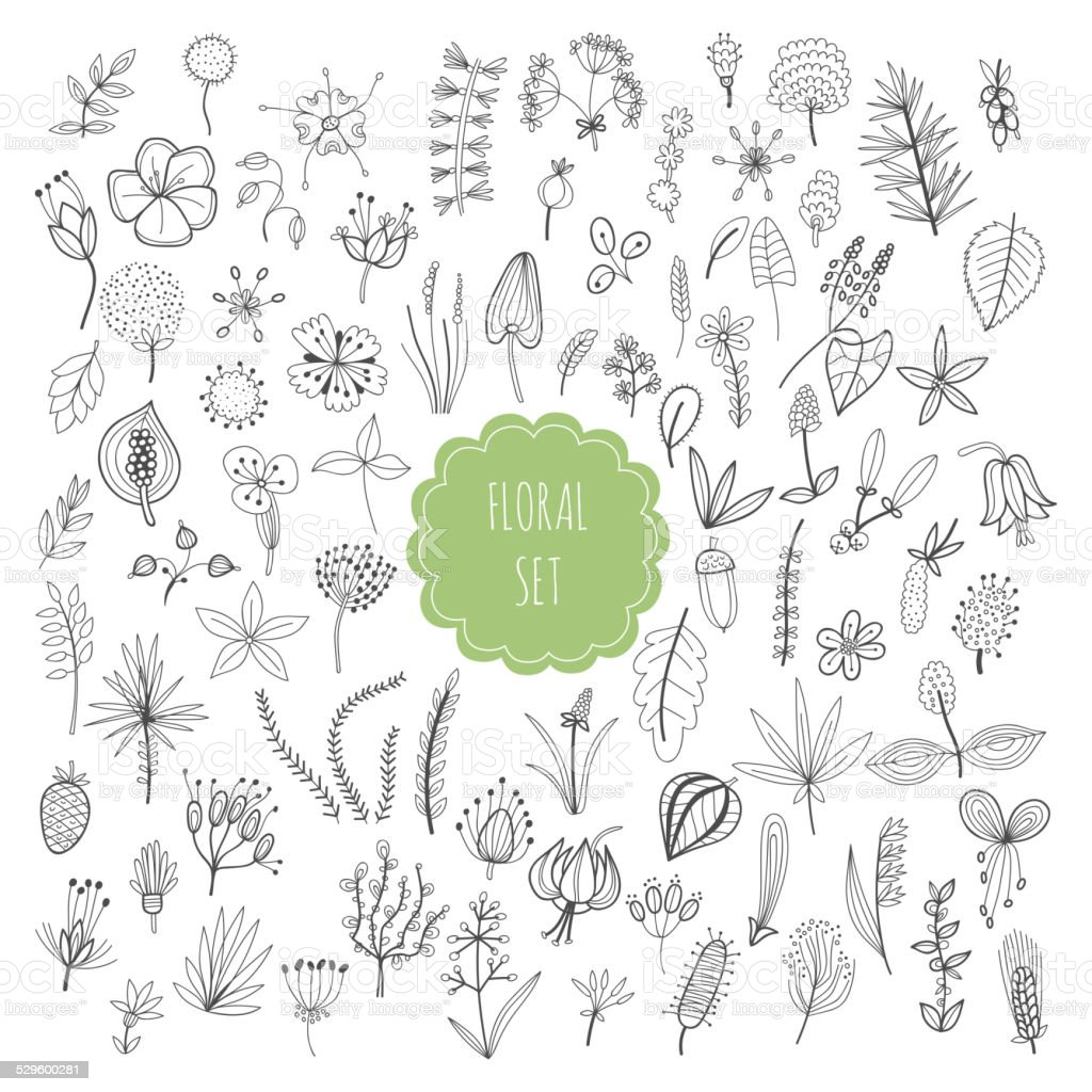 Floral set, plants and herbs vector art illustration
