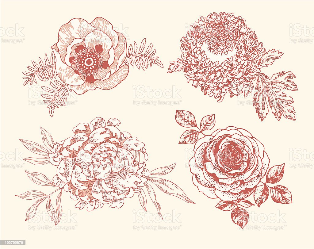 Floral Vignettes royalty-free stock vector art