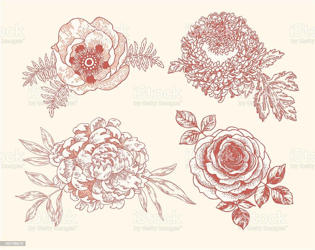 Floral Vignettes vector art illustration