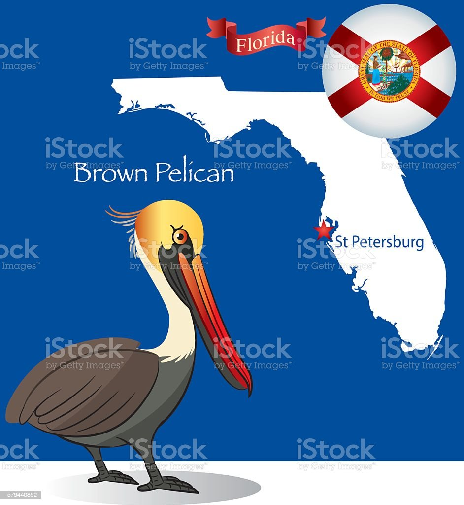 Florida Brown Pelican vector art illustration