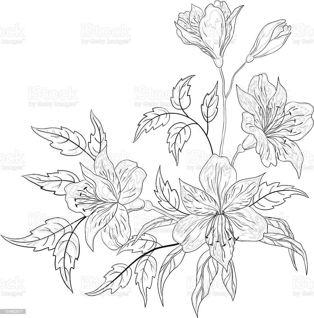 Flower alstroemeria, contour royalty-free stock vector art