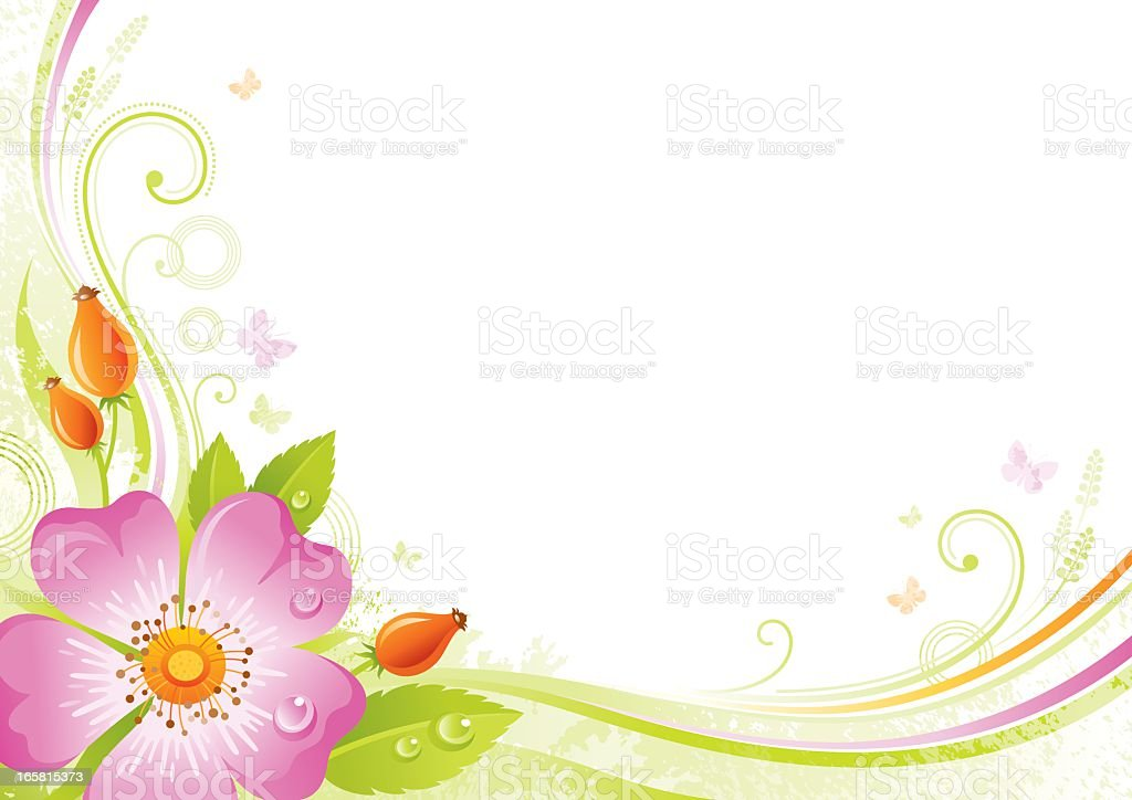 flower background with copyspace pink wild rose stock