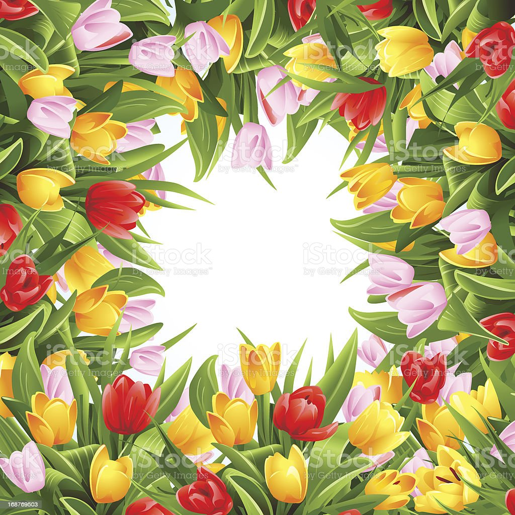 Flower background with tulips royalty-free stock vector art