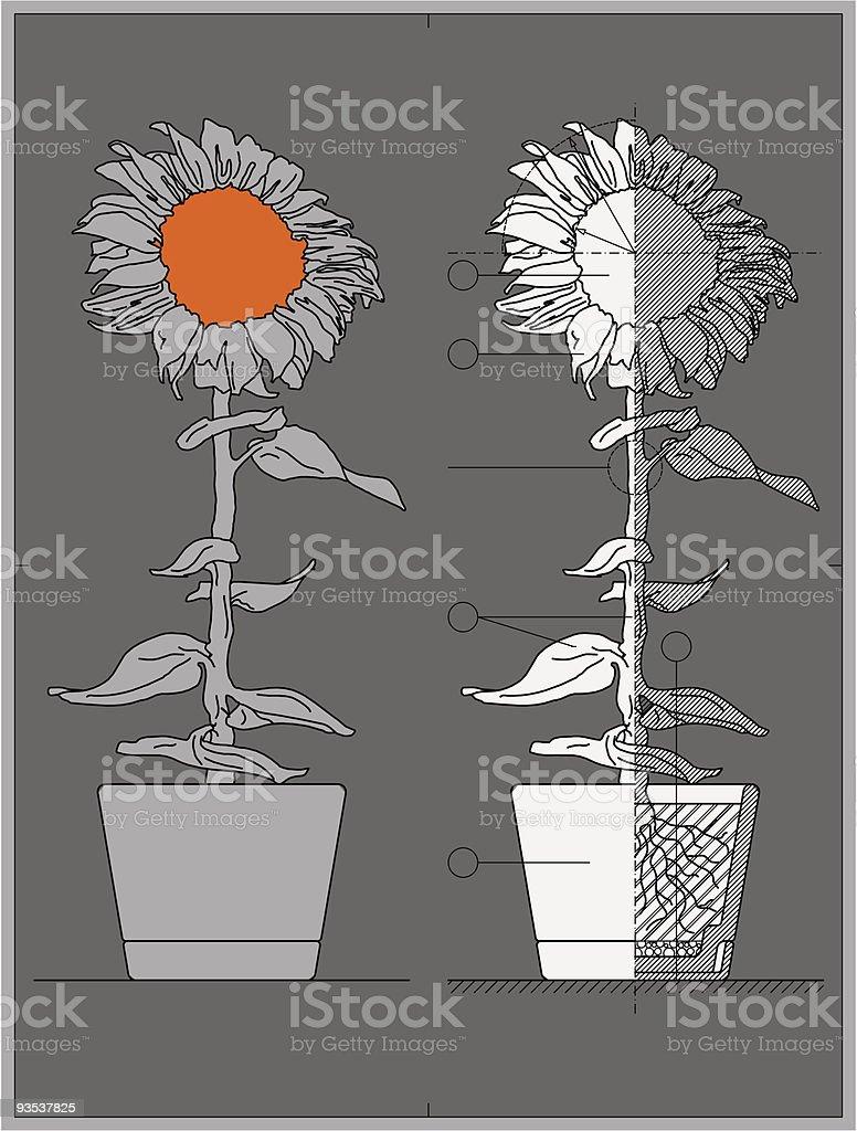 flower blueprint royalty-free stock vector art
