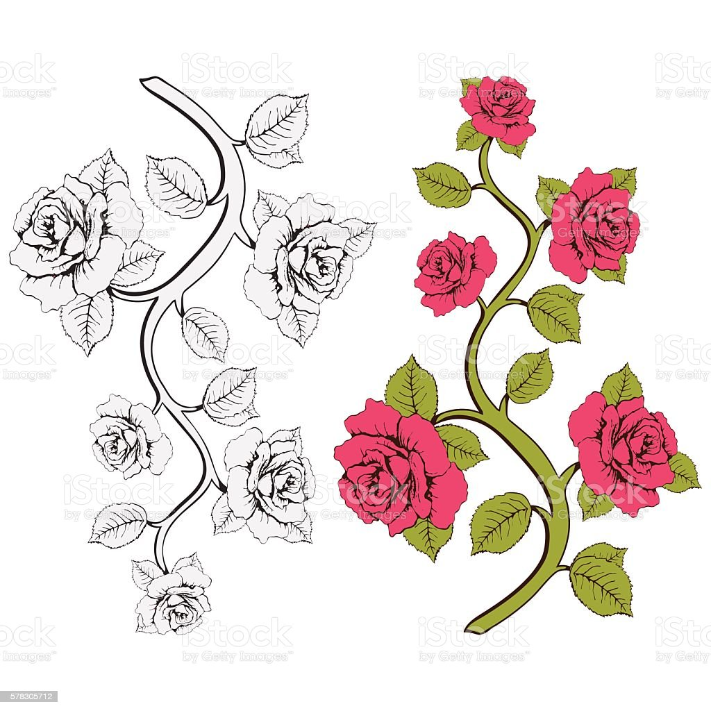 Flower branch roses. Set of pink and white roses branches royalty-free stock vector art