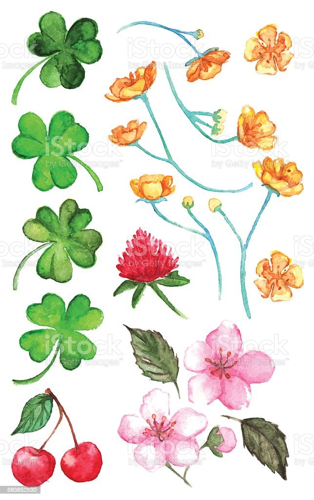 Flower clover cherry berry buttercup set clip art isolated vector vector art illustration