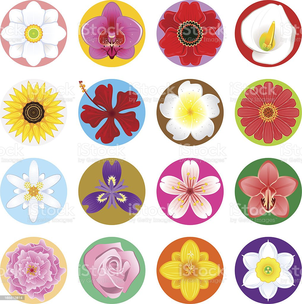 Flower Collection Set royalty-free stock vector art