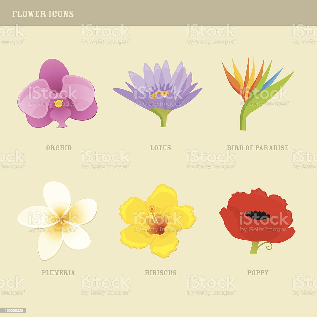 Flower Icons: Orchid, Lotus, Bird of Paradise, Plumeria, Hibiscus, Poppy vector art illustration